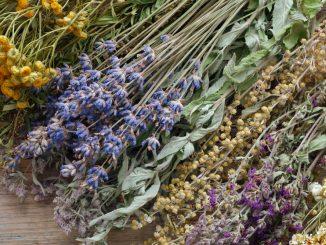 medicinal and healing herbs