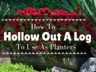 how to hollow out a log to use as a planter