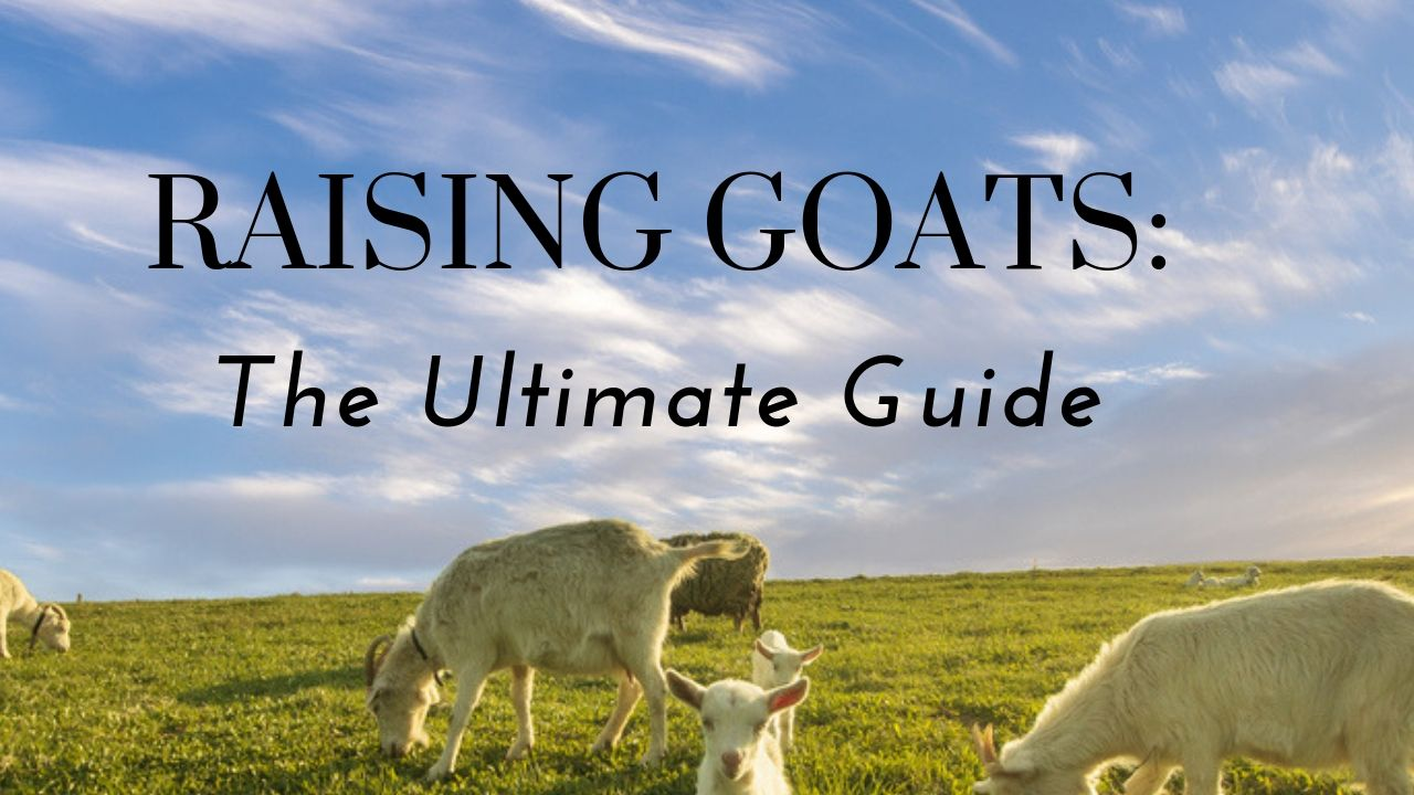 How To Raise Goats - The Ultimate Guide