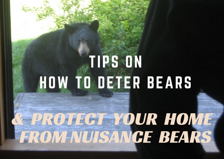 how to deter bears - protect your home from nuisance bears