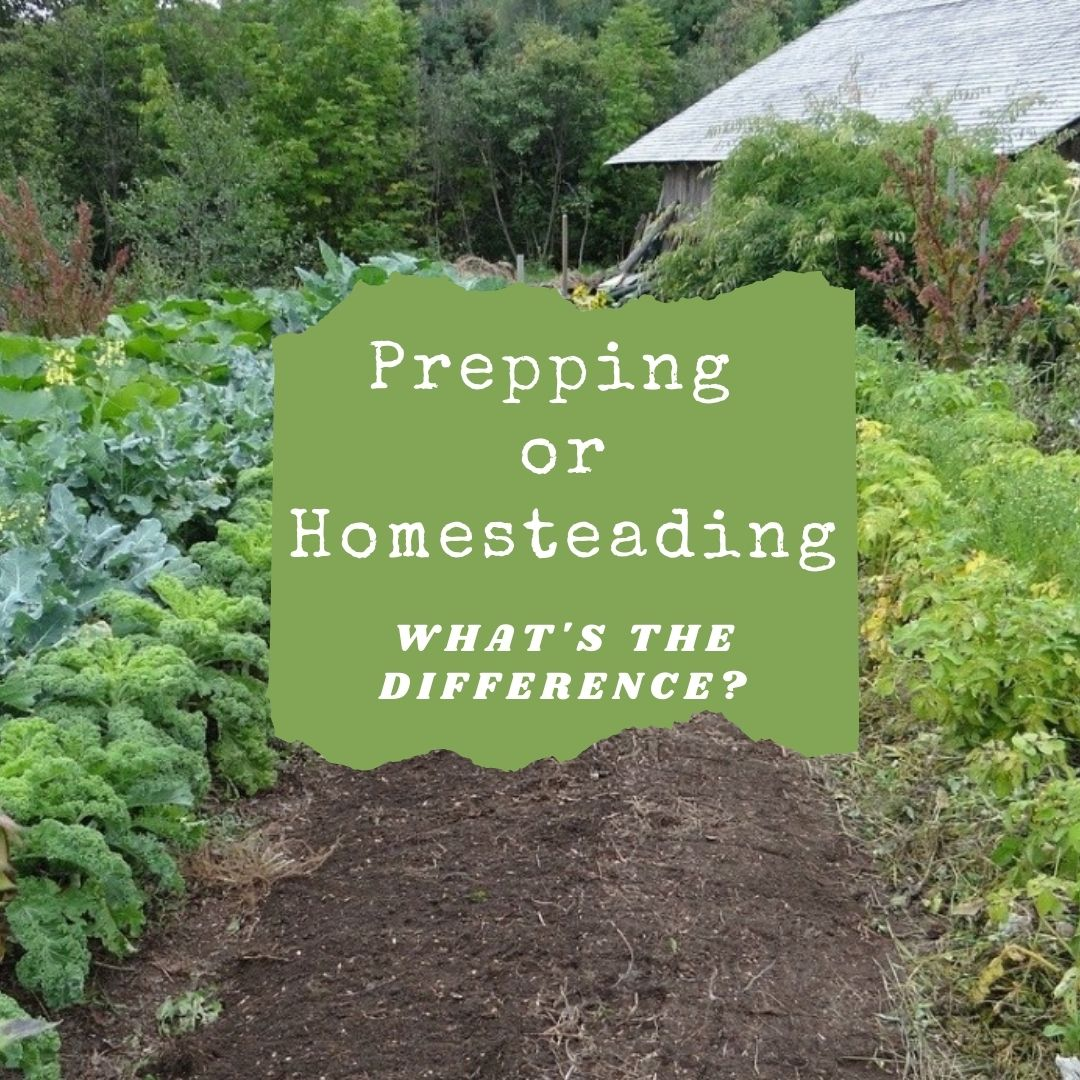 Prepping vs Homesteading - What is the Difference