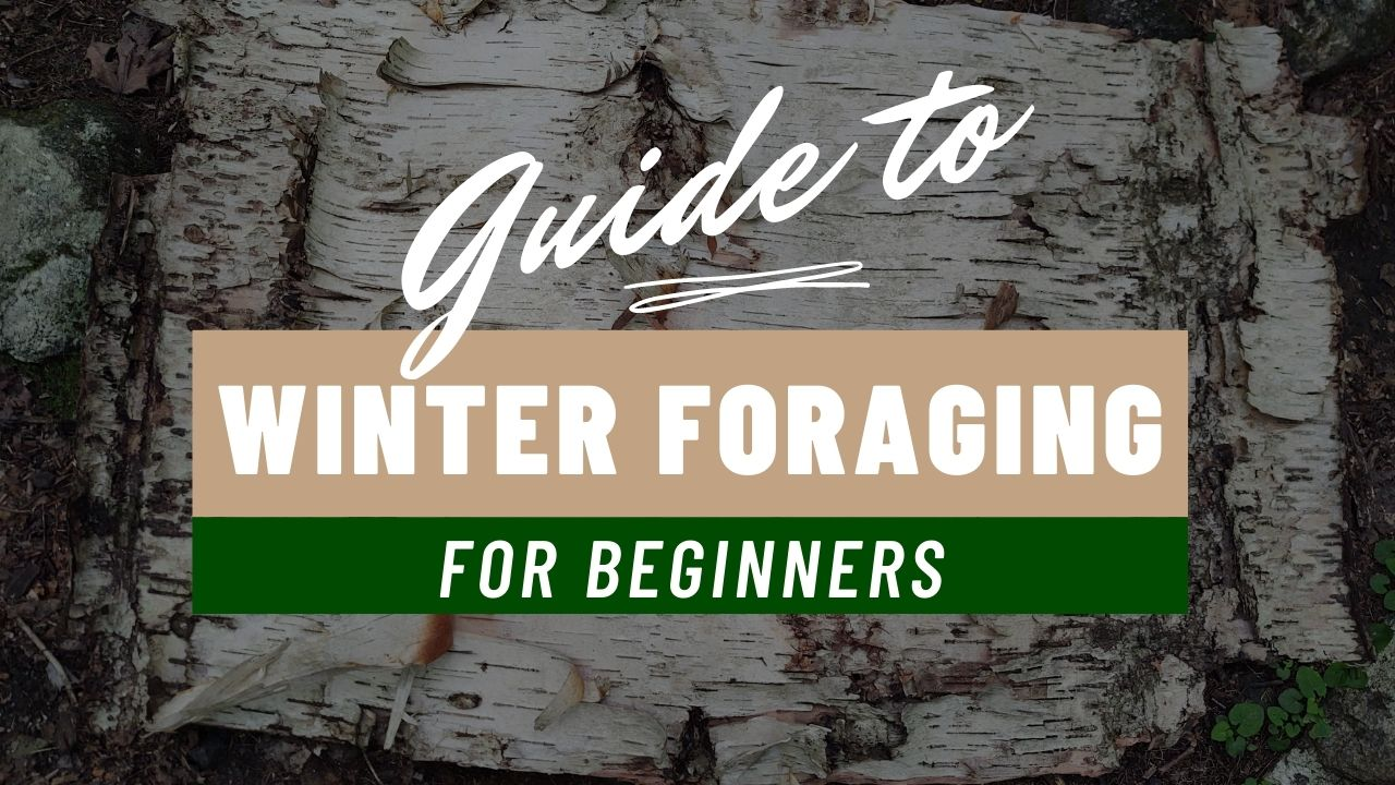 Guide to Winter Foraging for Beginners